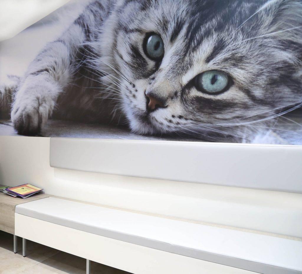 Clinique vétérinaire du Vernet (31)