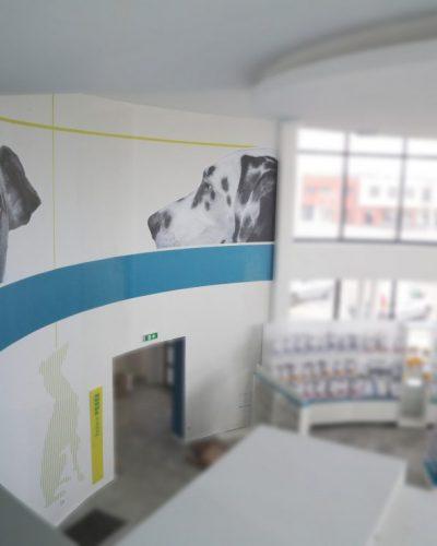 signaletique-fondu-clinique-veterinaire-1110x740